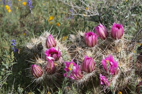 wild arizona flower weed unitedstates tucson peak az interstate i10 wildflower picacho sighseeing