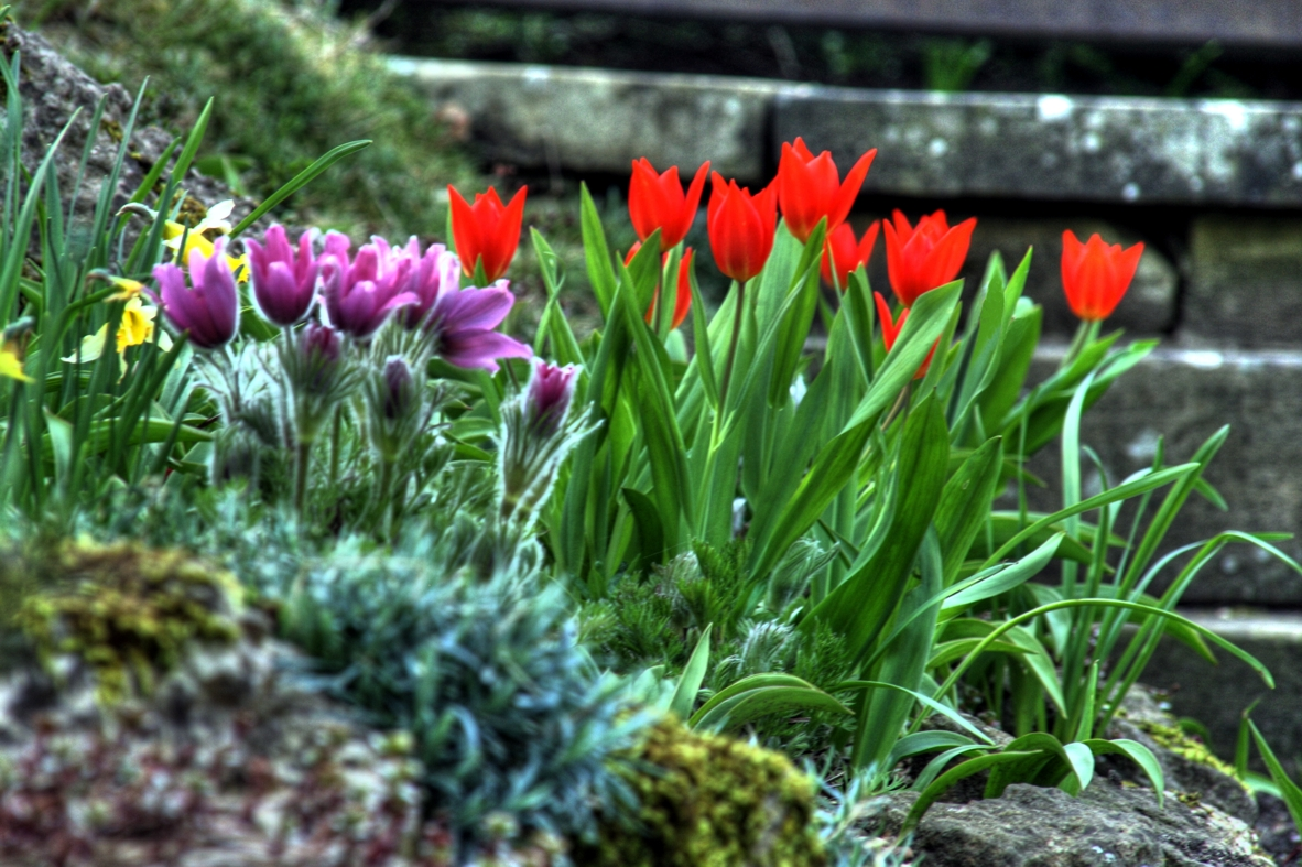 Garish flowers in Balliol Fellows Garden