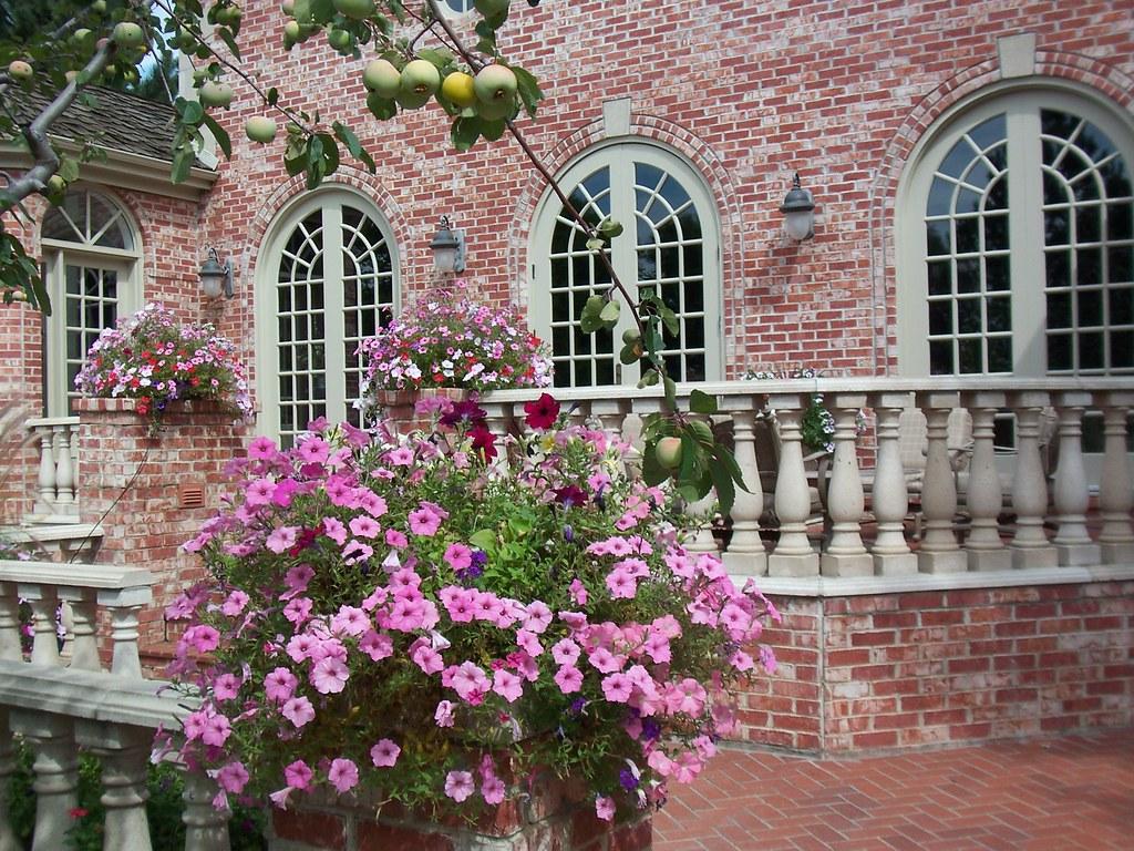 Annual flower garden design for Annual garden designs