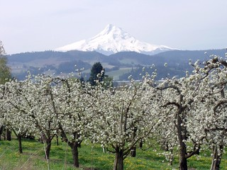RV Internet Mt. Hood with Hood River Valley orchards