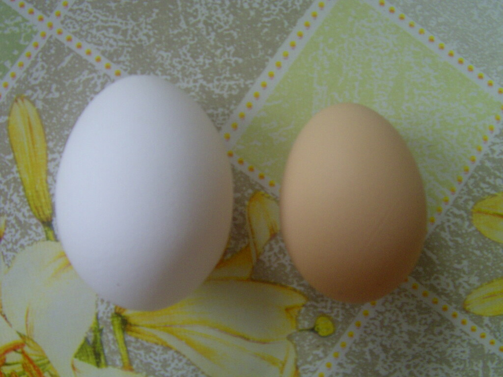 Huge egg vs normal egg