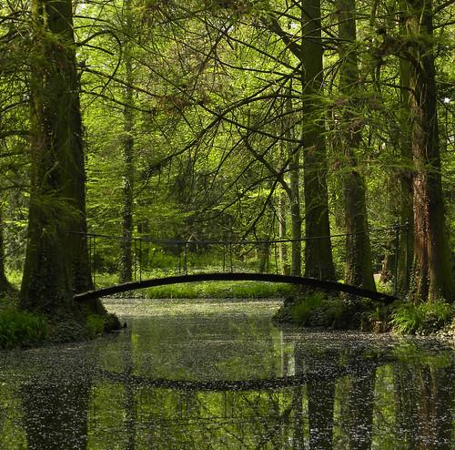 bridge green spring nikon coolpix fir p90 szabadkígyós cmwdgreen nikonp90