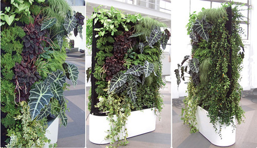 Emejing siepe in vaso per terrazzo images amazing design - Siepi da terrazzo ...