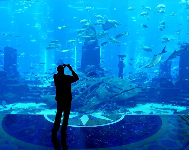 dubai atlantis aquarium flickr photo sharing