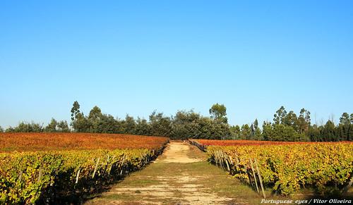 Arredores da Cunha Baixa - Portugal