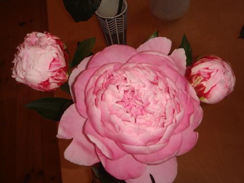 Blommor från Lotta