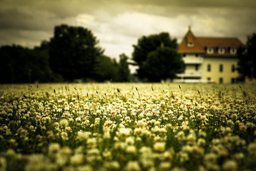 ~ endless clover. [Explore]