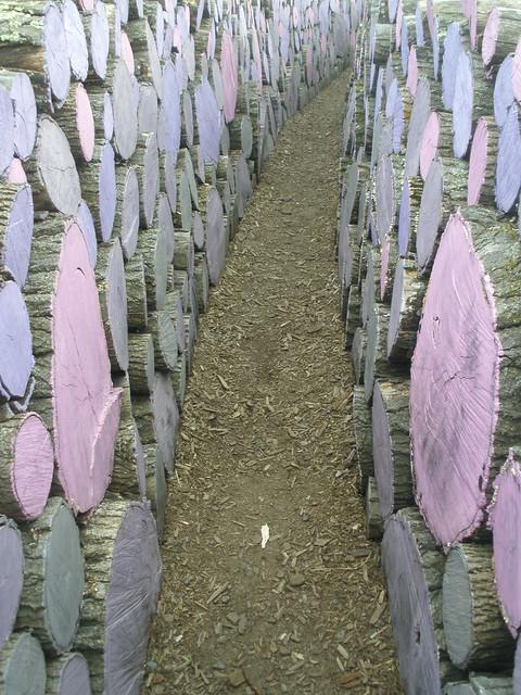 Purple Log Pathway