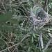 Bird's Nest Near New Beaver Dam