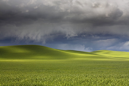 Green Rolling Hills - Palouse, Washington