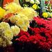 Flores en Mendoza por Aleexis Santos Heredia