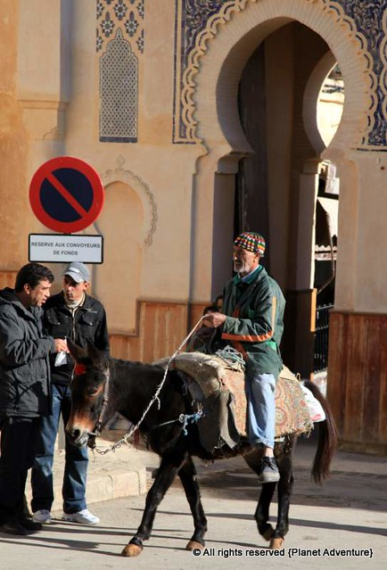 Mule Riding - Fez - Morocco