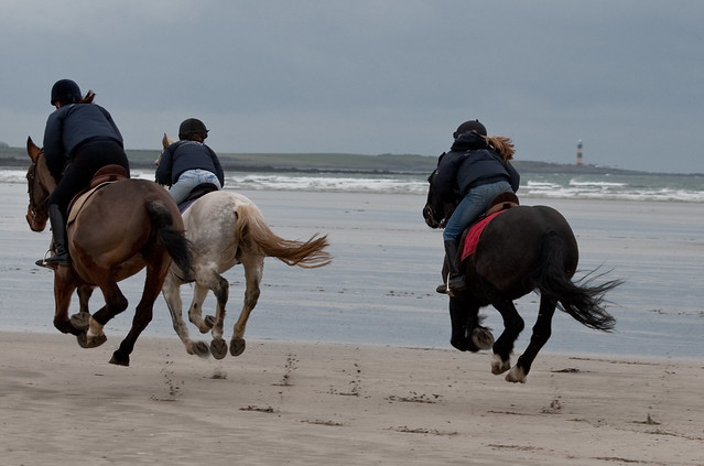 horses on beach galloping away flickr photo sharing