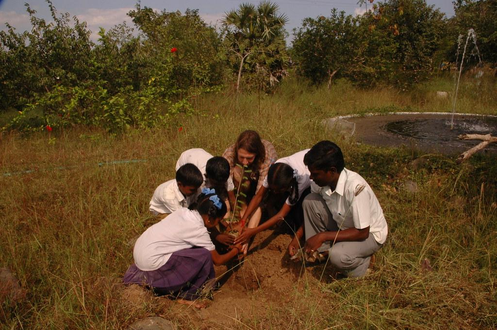 Tree planting (2)