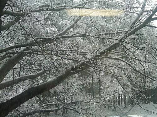 trees atlanta winter sky snow storm ga scenery snowstorm lawrenceville 2010 atlantaga winterstorm gwinnettcounty gwinnett lawrencevillega snowinatlanta gwinnettcountyga 2010snow snowinatlantaga 2010atlantasnow georgiascenery