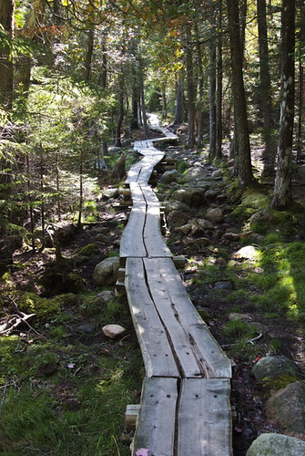 Wood Plank Walkway : Wood walkway made out of planks around