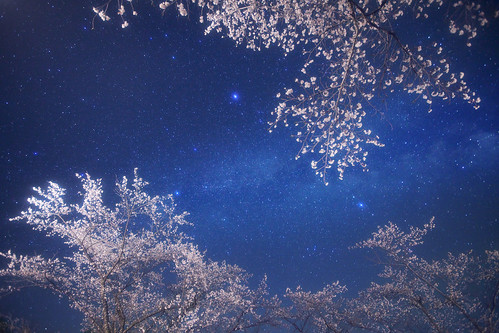 Cherry blossom galaxy
