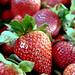 strawberry fields forever. by ceratosaurrr.