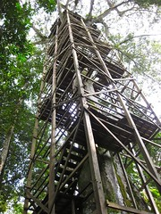 outdoor structure(0.0), tree house(0.0), tower(0.0), tree(1.0), observation tower(1.0),