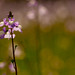 A Bokeh of Wildflowers / Day 74 - Project 365