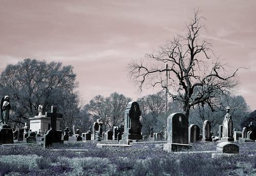 Calvary Cemetery by joespake