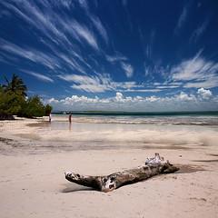 Isla Catalina ::Vertorama