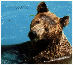 . Bear - Zoo RJ