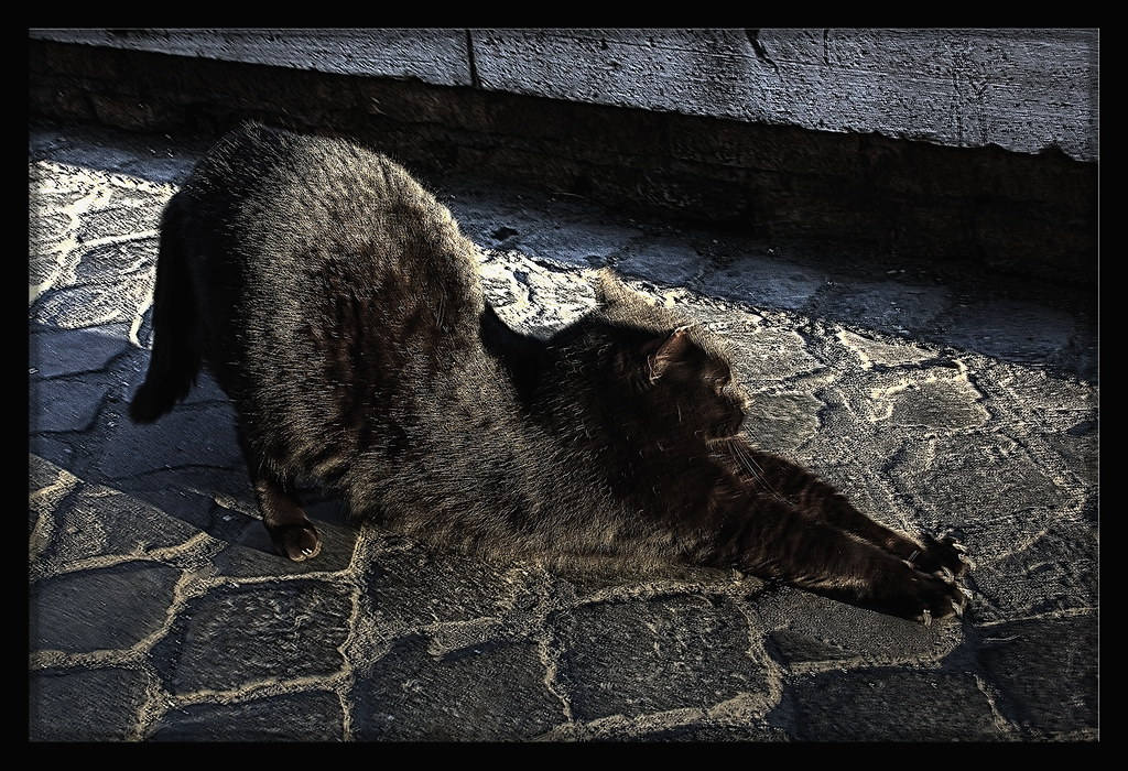 A wild cat from the streets of Rome
