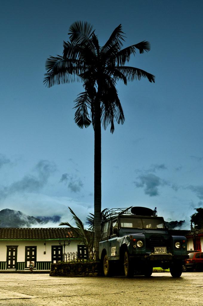 Imagen de una palma en la Plaza de Bolívar - Imágenes de Salento, Quindio