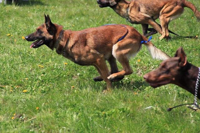 Romanian Dog Rescue Repossesed Dog