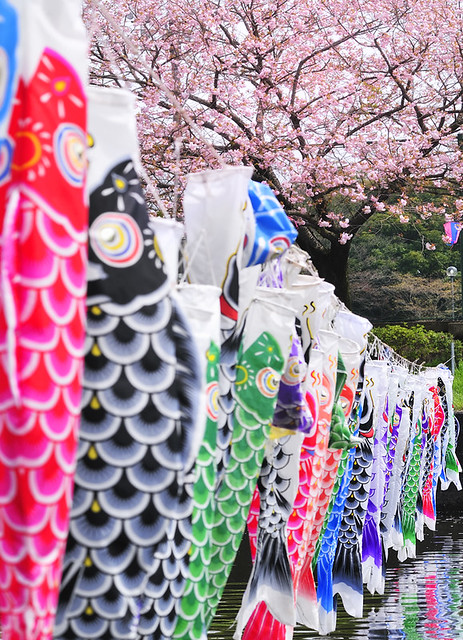 Koi nobori flickr photo sharing for Japanese koi windsock