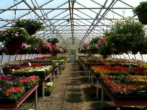 Greenhouse at Van Houten Farms