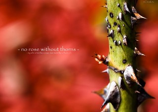 - no rose without thorns -