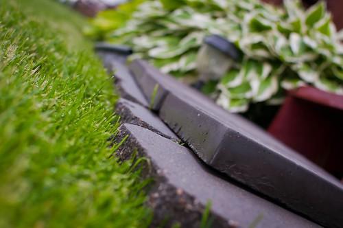 green grass dof steps hostas nikon35mm nikond5000