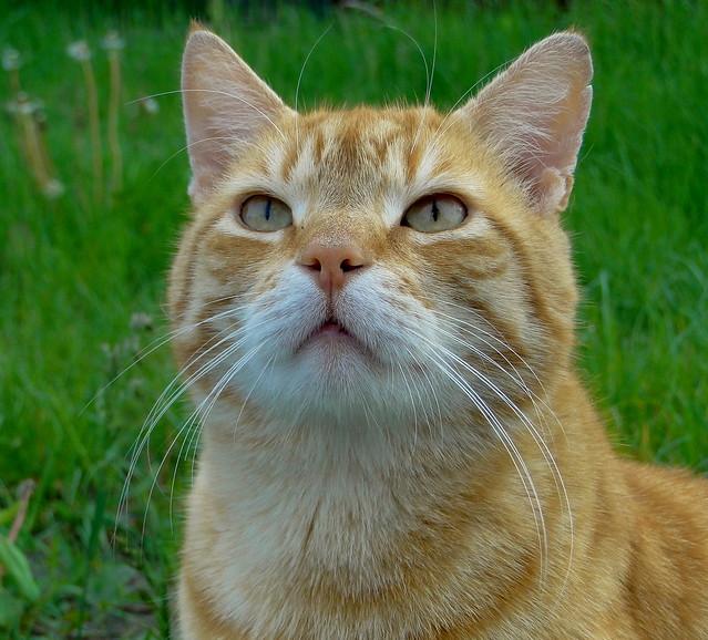 Blonde Cat Nude Photos 1