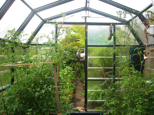 Greenhouse at the Edible Office