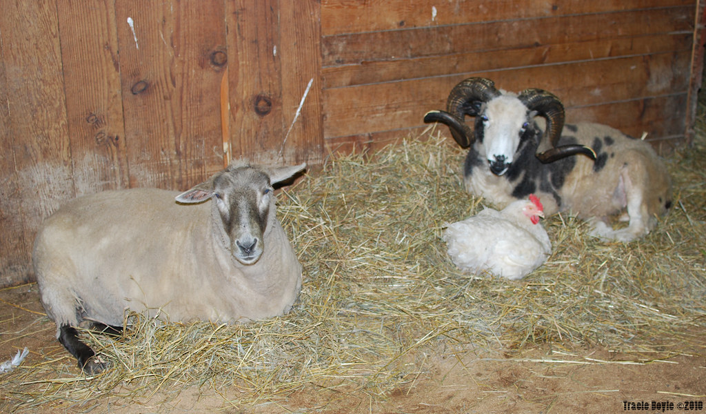 Catskill Animal Sanctuary 9th Annual Shindig | Catskill Anim… | Flickr