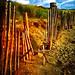 Fence by jonty storey