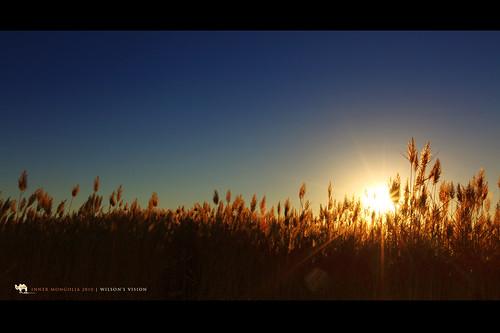 china sun lake water sunrise canon gold dawn golden weeds scenery desert wideangle mongolia sunburst 內蒙古 canoneos5dmarkii canonef1635mmf28lusmii wilsonsvision juyanlake
