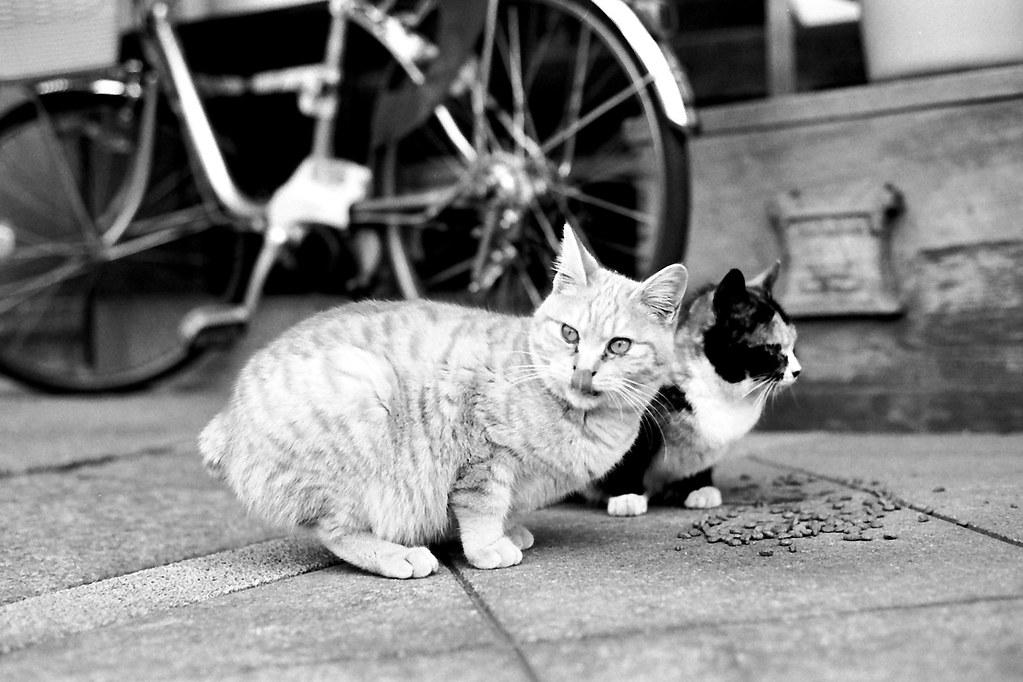 猫2匹 2010/02/06 FM2_044_0028