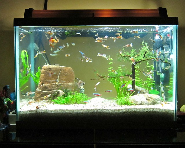 20 Gallon Aquarium Explore Redtimmy S Photos On Flickr