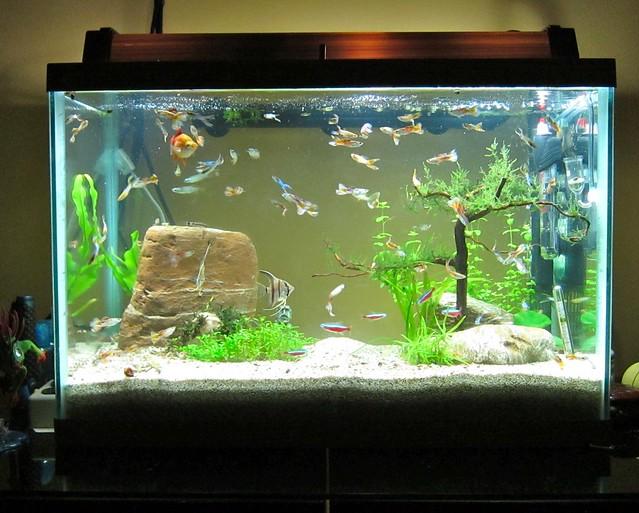 20 gallon aquarium explore redtimmy 39 s photos on flickr for Fish tank 20 gallon