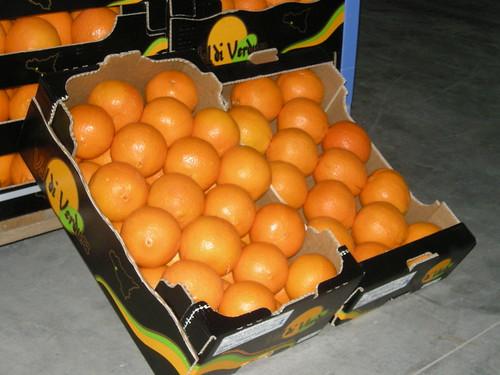 Notiziario sugli agrumi di sicilia arance mandarini for Calendario concimazione agrumi