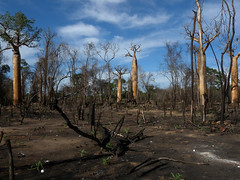 Slash and Burn Agriculture, Morondava, Madagascar
