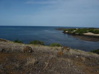 Image of Stone Leaning Post. hawaii bigisland hilo kona