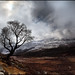 Tree and snow clouds on Schiehallion
