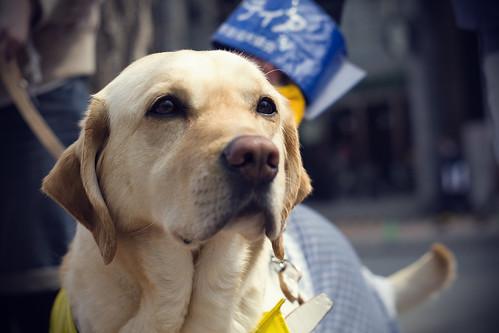 Hokkaido Guide Dog Association