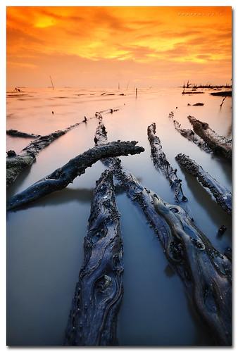 sea seascape beach nikon laut roots sigma malaysia 1020mm tobacco pantai selangor d300 cokin cunset banting kelanang azralfikri shazral p125m