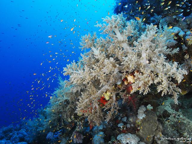Mar Rojo buceo