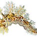 Dendronotus frondosus, Ernst Haeckel, http://en.wikipedia.org/wiki/Ernst_Haeckel